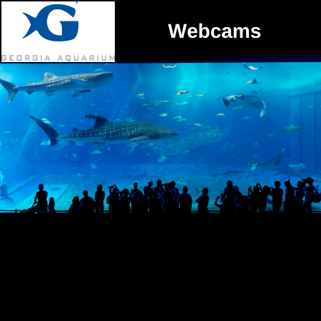 GA Aquarium Webcam.png